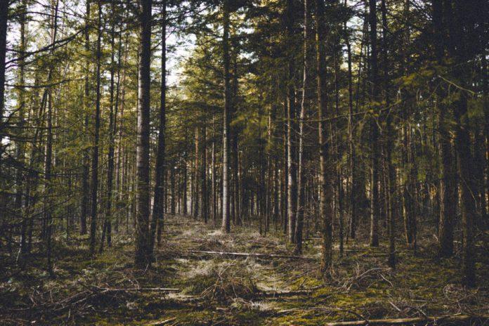 Полесская флористическая терминологии в микротопоническом преломлении