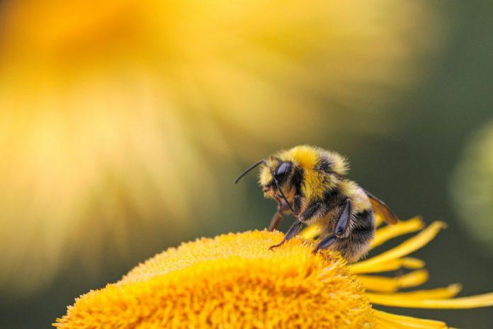 В пользу богохранимых пчёл. Рукопись 1832 г. из фондов Гомельского музея и языковая модель мира