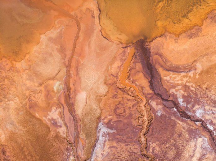 Содержание цинка в мягких тканях прудовика обыкновенного в водных экосистемах г. Гомеля